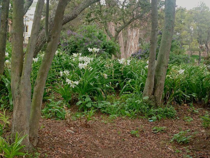 Bosque Belleza Natural Con La Lluvia Colombia ♥  Tunja, Colombia. Natural Beauty