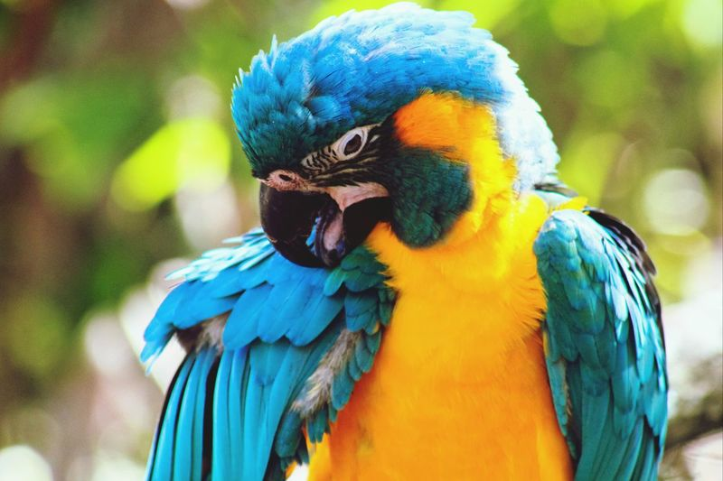 Close-Up Of Gold And Blue Macaw In Forest