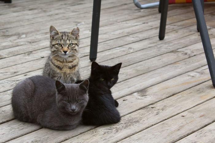 Black Cat Cats Grey Cat Tiger Cat Young Cats