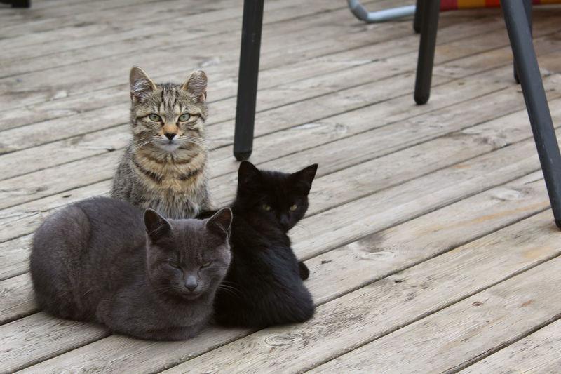 Portrait of cats on boardwalk