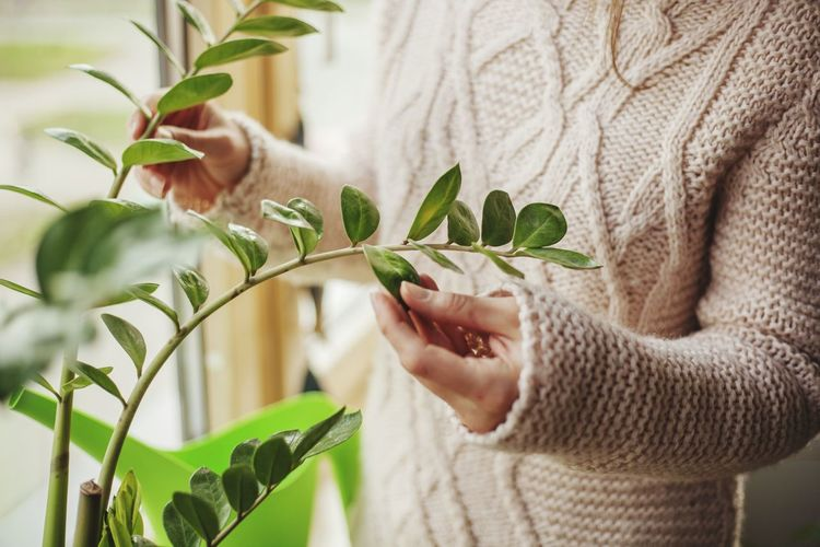 Holding Winter Cosy Home Window Close-up Human Hand Women Young Women Leaf Agriculture Wellbeing Close-up Plant Green Color Greenhouse Horticulture Planting Florist Gardening