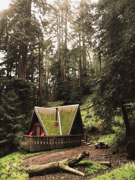 Perfect hideout in California Tree Forest Day No People Growth Outdoors Nature Beauty In Nature Tree Cabin Log Cabin A Frame Secret Places Secret Moss Camping Camp Forest Photography Forest Trees Forest Path Forestwalk Campsite Campsite View Hidden Hidden Beauty