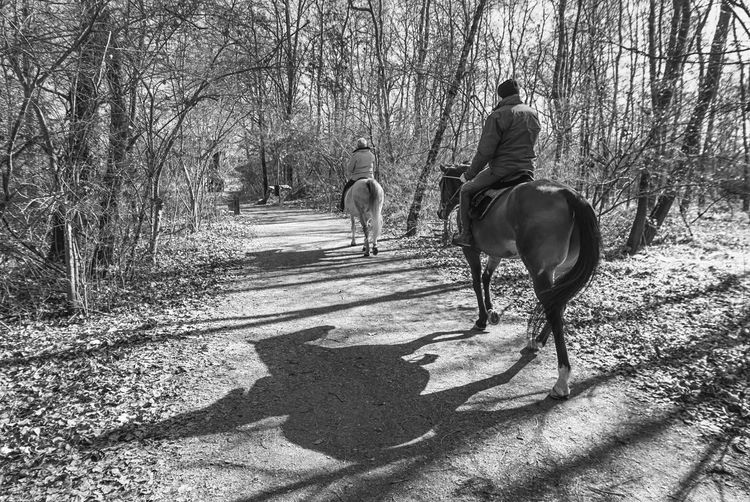 Rear view of dog riding horse