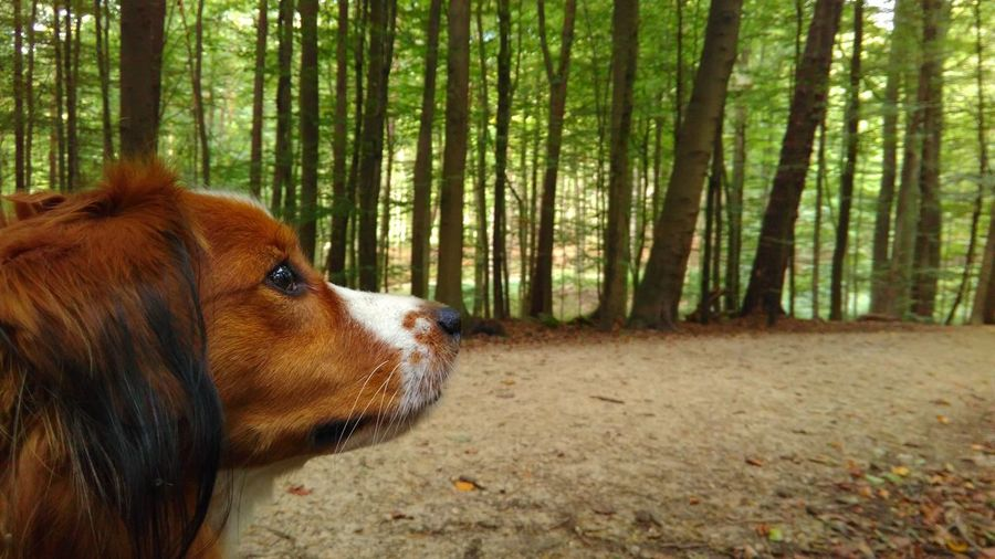 Close-up of dog in forest