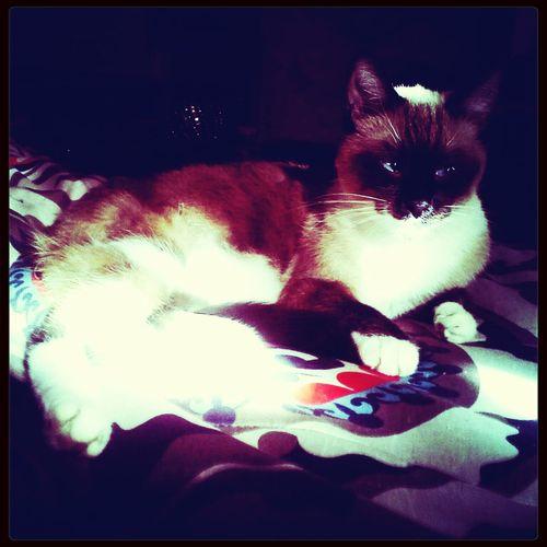 Domino The Cat Relaxing Enjoying Life Winding Down