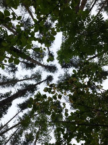 Tree Plant Low Angle View Growth No People Beauty In Nature Nature Tree Canopy  Green Color Sky Full Frame Tranquility Backgrounds Day