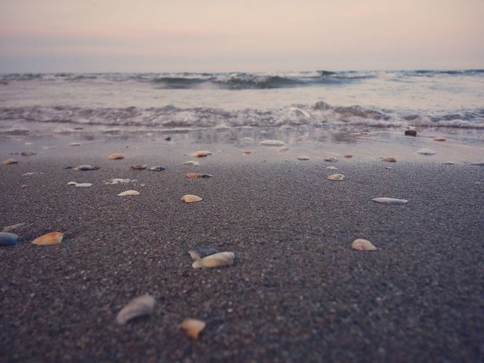 Sand and Sea Beach Beauty In Nature Day Horizon Over Water Nature No People Outdoors Pebble Pebble Beach Sand Scenics Sea Shell Shells Shore Sky Surface Level Tranquil Scene Tranquility Water Wave
