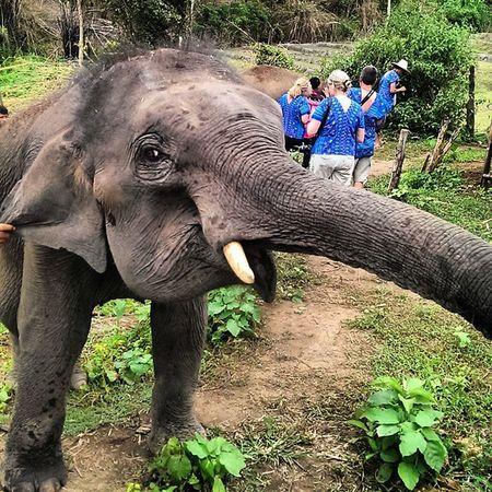My little friend Clifford Elephant Travel Traveling Thailand Bestoftheday Beauty
