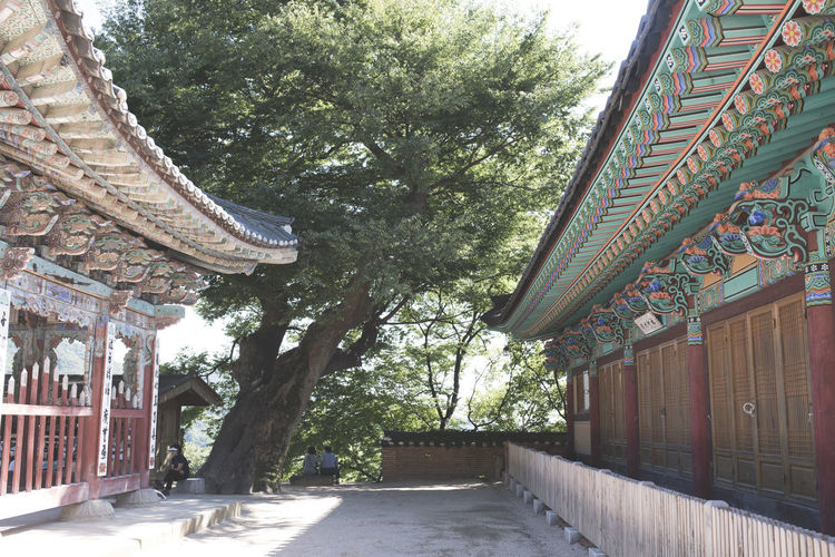 Architecture Branch Buddhism Building Exterior Built Structure Day Growth Korea Low Angle View Nature No People Outdoors Roof Sky Tiled Roof  Tree