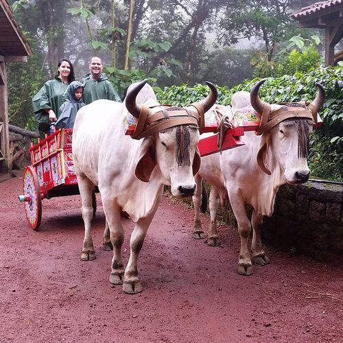 Transporte ecológico Everythingopro Costarica Waterfallgardens FamilyTime vacation weekendadventures