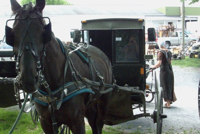 Amish Buggy Amishcountry Domestic Animals Horse And Buggy