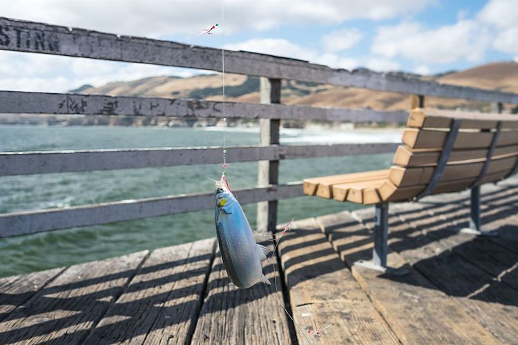 Bench California Catch Fish Fishing Fishing Rod Nature Ocean Ocean View Outdoors Pier Railing Scenics Tourism Travel Destinations Wood - Material
