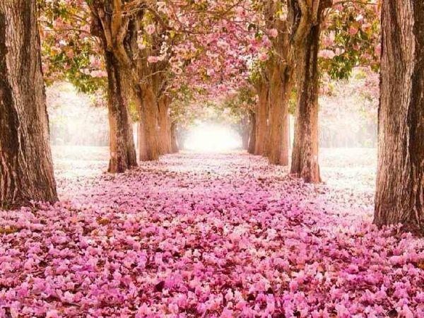 cennet yolu