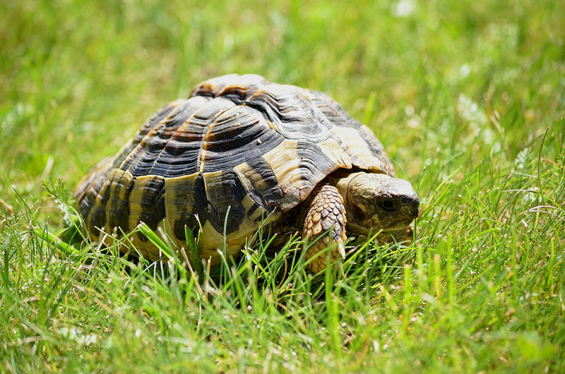 Close-up of a turtle on grass