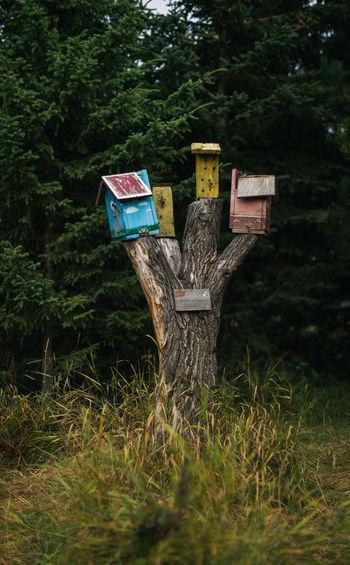Tree stump with birdhouses