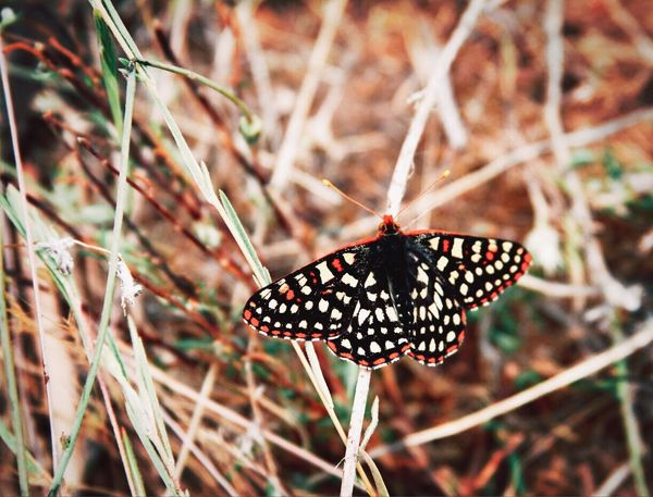 Butterfly Butterfly - Insect Animals In The Wild Animal Themes Insect One Animal Butterfly Nature Animal Wildlife Outdoors Day No People Plant Focus On Foreground Animal Markings Beauty In Nature Close-up Spread Wings Perching Freshness