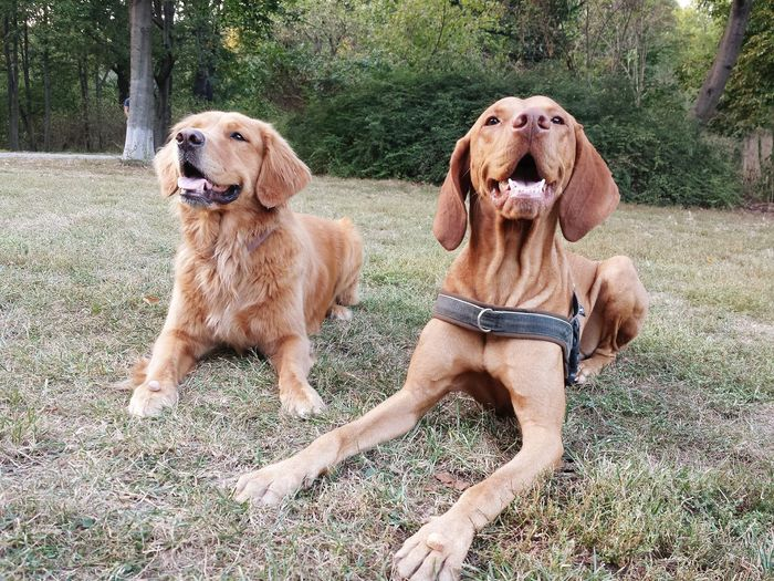 Dogs sitting on field against trees