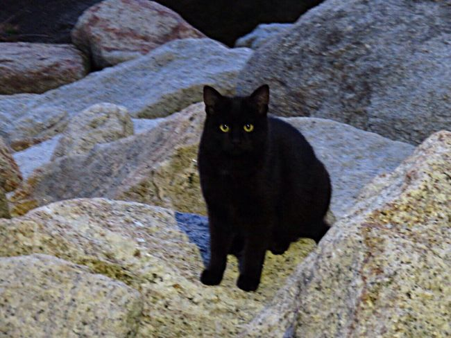 Cat Cat♡ Cat Lovers Cats Of EyeEm Catlovers Cat Watching Animals Animal Seaside BLackCat