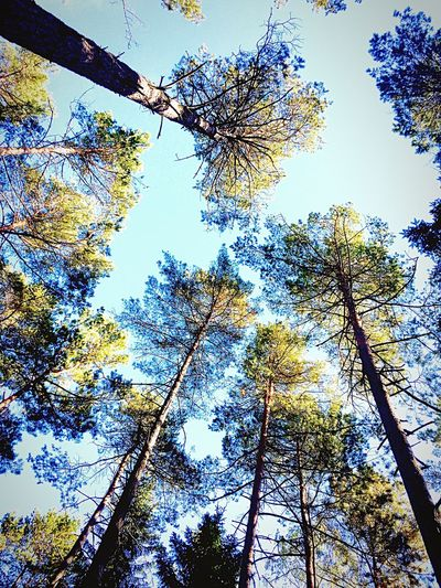 Forest Trees by iPhone
