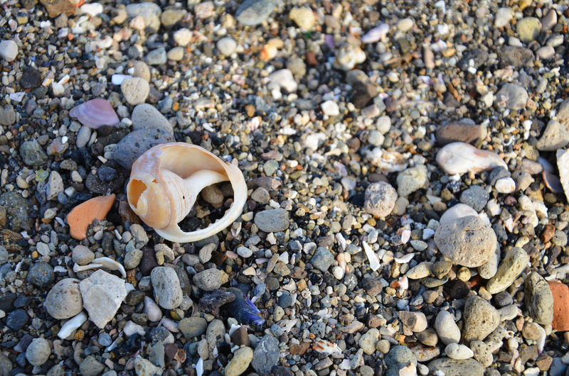 Pebbles and broken shell. Abundance Animal Shell Backgrounds Beach Close-up Day High Angle View Large Group Of Objects Nature Outdoors Pebble Rock - Object Sand Seashell Shell Shore Still Life Stone Stone - Object Tample Textured  Textured  Textures Textures And Surfaces