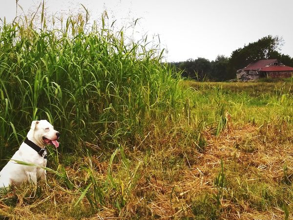 Dog Pets Domestic Animals One Animal Grass Animal Themes Outdoors Mammal No People Day Nature Sky The Week On EyeEm