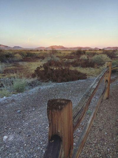 Nevada Nature
