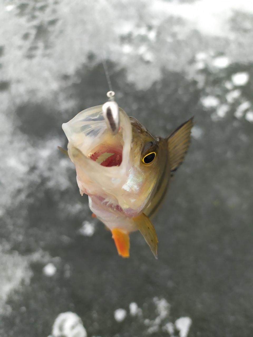 HIGH ANGLE VIEW OF FISH IN WATER