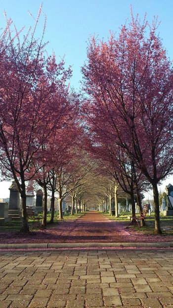 this morning at my favorite cemetery -- zero edits! StreamzooVille Grave Yard Pink! TheVille