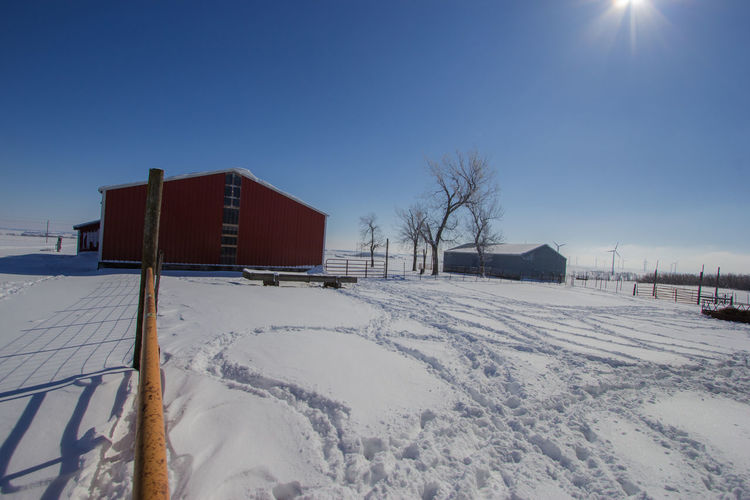 Agriculture Cattle Yard Farm Gate Bare Tree Blue Building Built Structure Canon60d Canonphotography Clear Sky Day Farm Yard Feed Bunk Fence Fence Post Machine Shed Outdoors Sky Snow Track Winter