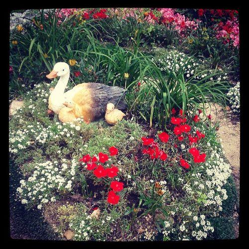 кузьминки цветы клумба лето природа kuzminki flowers summer