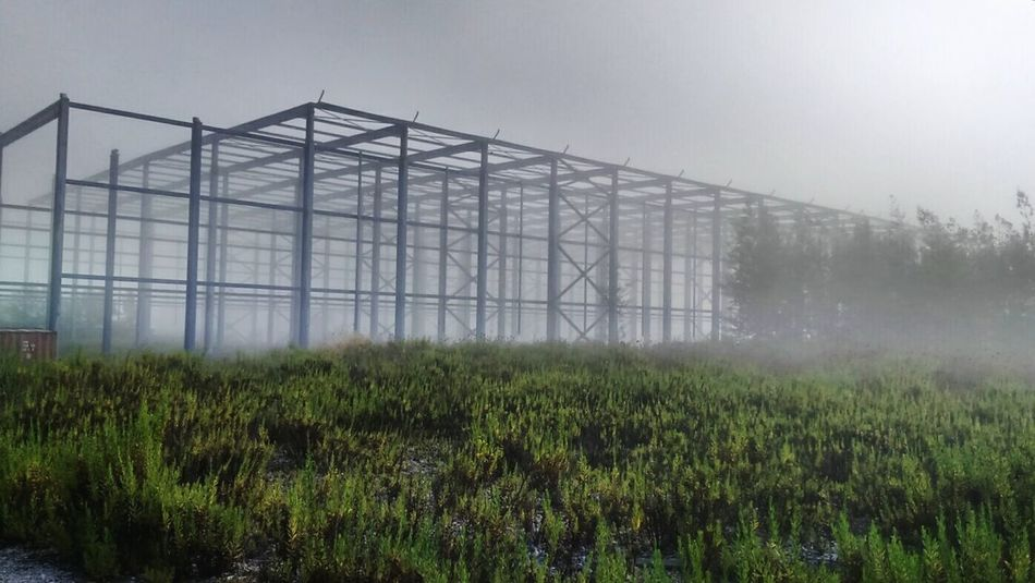 Wreck Fog Nature Environment Grass No People Built Structure Sky Tree Day Outdoors Taking Photos Countryside Skeleton Vanishing Green Colour White Architecture Autumn