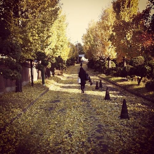 가을 노란 낙엽 언덕길