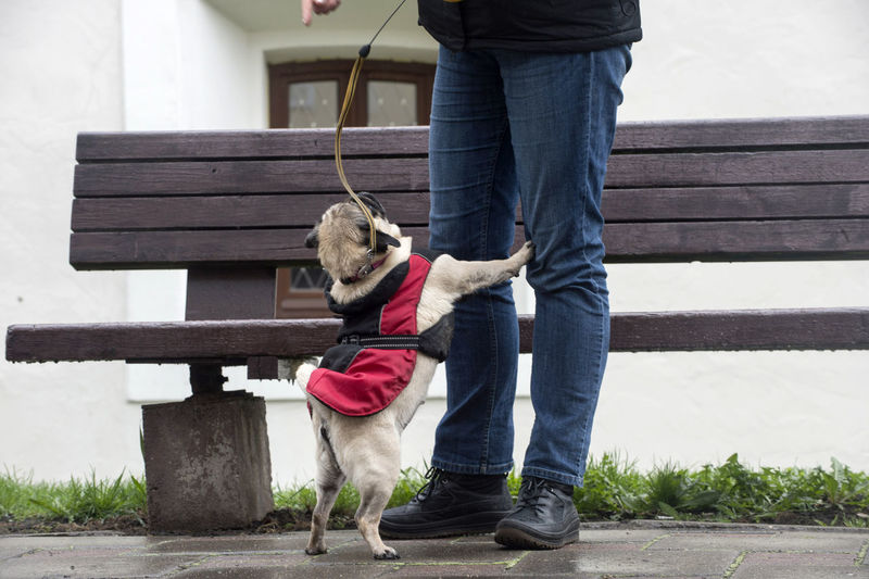 Canine Casual Clothing Day Dog Domestic Domestic Animals Jeans Leisure Activity Lifestyles Low Section Mammal One Animal One Person Outdoors Pet Owner Pets Real People Standing Vertebrate