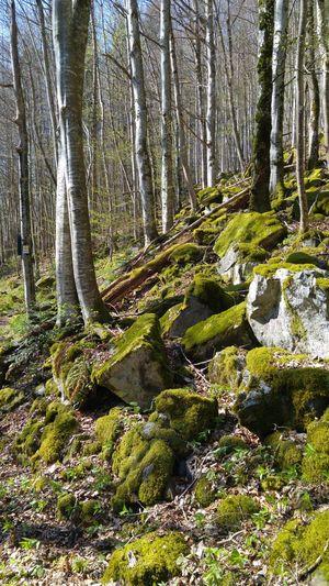 The Great Outdoors - 2017 EyeEm Awards Nature Hochschwarzwald Schwarzwald Forest Tree Blackforest