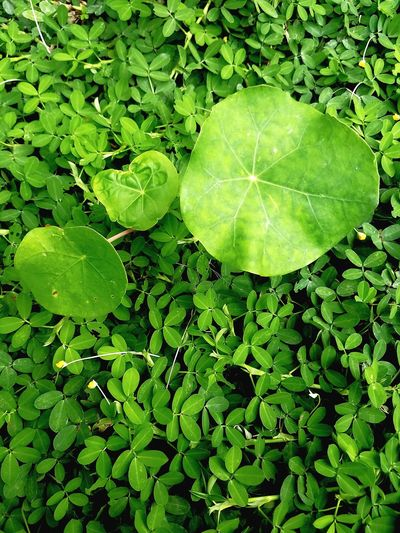 Leaf Plant Nature No People Freshness Growth