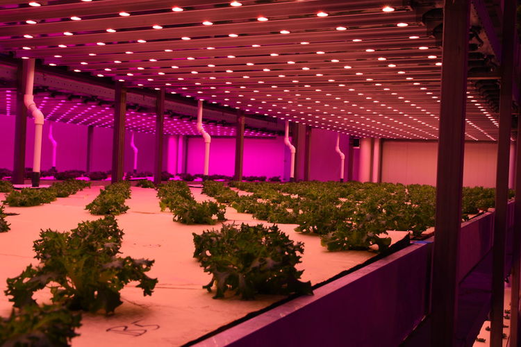 Growing High Tech LED LED Light Architecture Artificial Built Structure City Farming Day Environment Food Food Factory Future Horticulture Hydroponics Illuminated Indoors  Nature No People Plant Solutions Tree