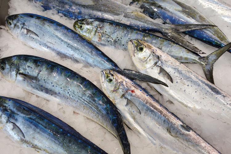 Mahi-mahi fish or common dolphinfish at seafood market