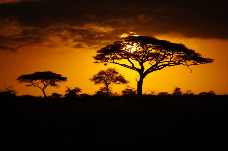 Sunrise in Serengeti, Tanzania, Africa Acacia Tree Beauty In Nature Landscape Lone Natural Park Nature No People Orange Sky Outdoors Scenics Serengeti Silhouette Sky Solitude Sonnenaufgang Sun Sunrise Sunrise Silhouette Sunset Tranquil Scene Tranquility Tree 日出 日落 非洲
