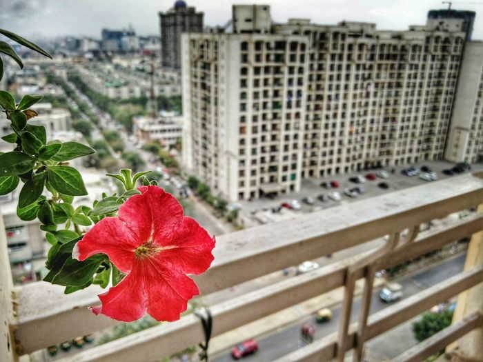 Close-up of red flower in city