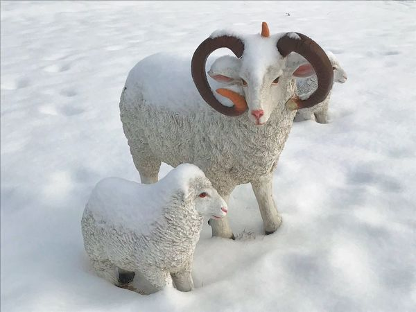 母子 snow Winter cold temperature white color animal themes Nature Livestock first eyeem photo 父子 母子 Snow Winter Cold Temperature White Color Animal Themes Nature Livestock