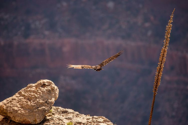 Bird flying over rock