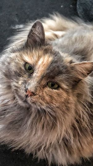 Cat Mammal One