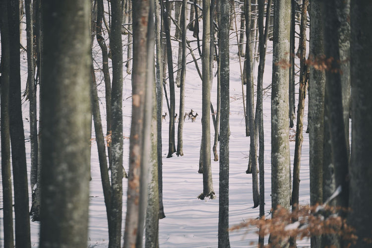 Scenic View Of Deer In Forest