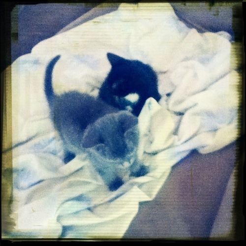 Omg Kittens The Kitties =^.^=