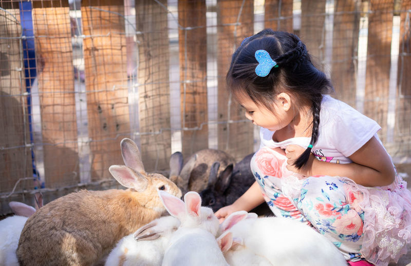 Side view of cute girl crouching by rabbits