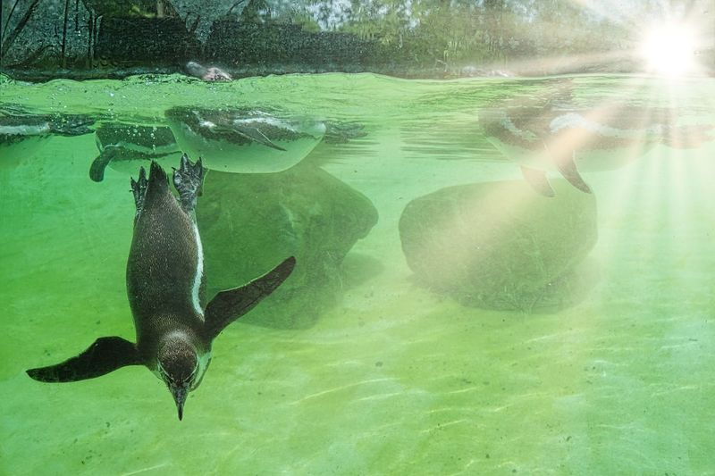 Zoology Zoo Pinguin Water Animal Themes Animal Vertebrate Swimming Animal Wildlife Animals In The Wild Nature Sea Underwater Day One Animal Sea Life No People Green Color Marine Sunlight Outdoors UnderSea