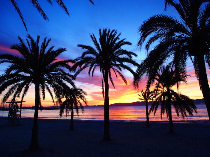 Balearic Islands Beach Dreaming Dreamy El Arenal Majorca Mallorca Sea Sea And Sky Sky SPAIN Summer SummerNights Sun Sunset Sunset_collection Sunsetcolors Sunsetsky Live For The Story