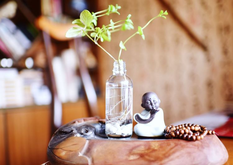 EyeEm Selects Plant Table Focus On Foreground No People Nature Vase Close-up Indoors  Still Life Flower Flowering Plant Container Leaf Day Food And Drink Plant Part Decoration Potted Plant Wood - Material Small