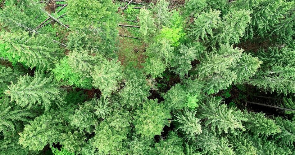 EyeEm Aerial Photography Picea Abies Aerial View Summer Exploratorium Aerial Shot Summer Exploratorium Backgrounds Full Frame High Angle View Textile Close-up Grass Green Color Growing Fragility LINE Plant Life