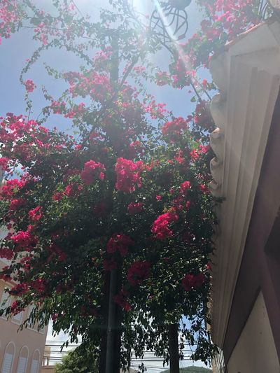 Sunray Puertoricotourism Puertorico No People Low Angle View Tree Plant Decoration Built Structure Window Day Nature Architecture Christmas Pattern Curtain Celebration Red Growth Wall - Building Feature Glass - Material Ceiling